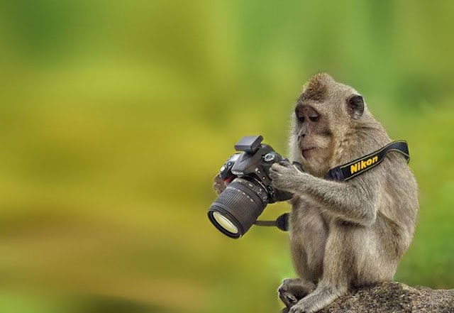 Animals That Want To Be a Photographers