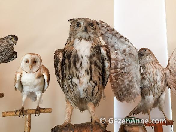 Dilek yarımadası milli parkında yaşayan kuşlar, Aydın