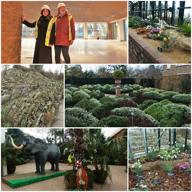 Winter delights at Wisley and a sneak peek at the new Welcome Centre