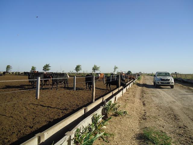 comederos feedlot en Macachin, La Pampa