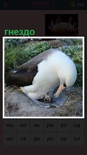 651 слов альбатрос сидит в своем гнезде 5 уровень