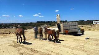 Fiscais posturas capturam animais
