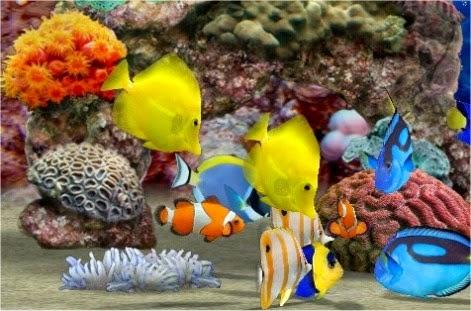 Unduh 760+ Gambar Ikan Hias Di Bawah Laut HD Terpopuler