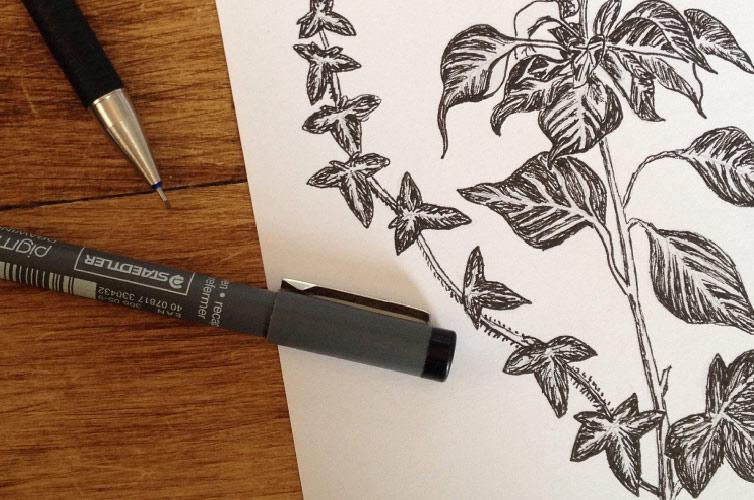 Ivy Drawing - Alfie's Studio