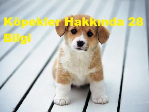 Köpekler Hakkında 28 Bilgi