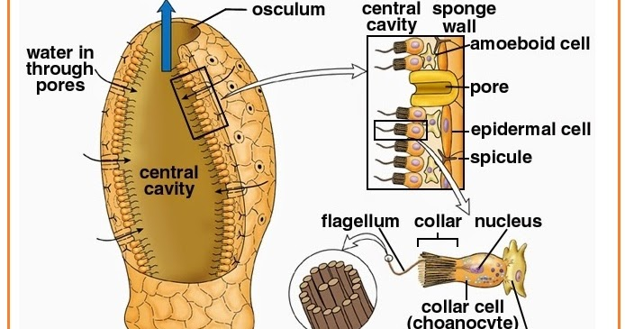 Contoh Makanan Hewan Invertebrata Erectronic