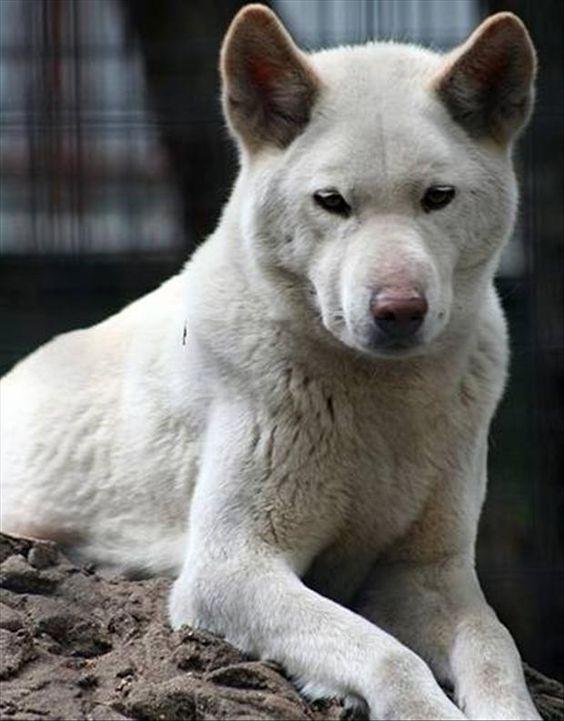 Wolf | A-Z List of 125 Rare Albino Animals [Pics]