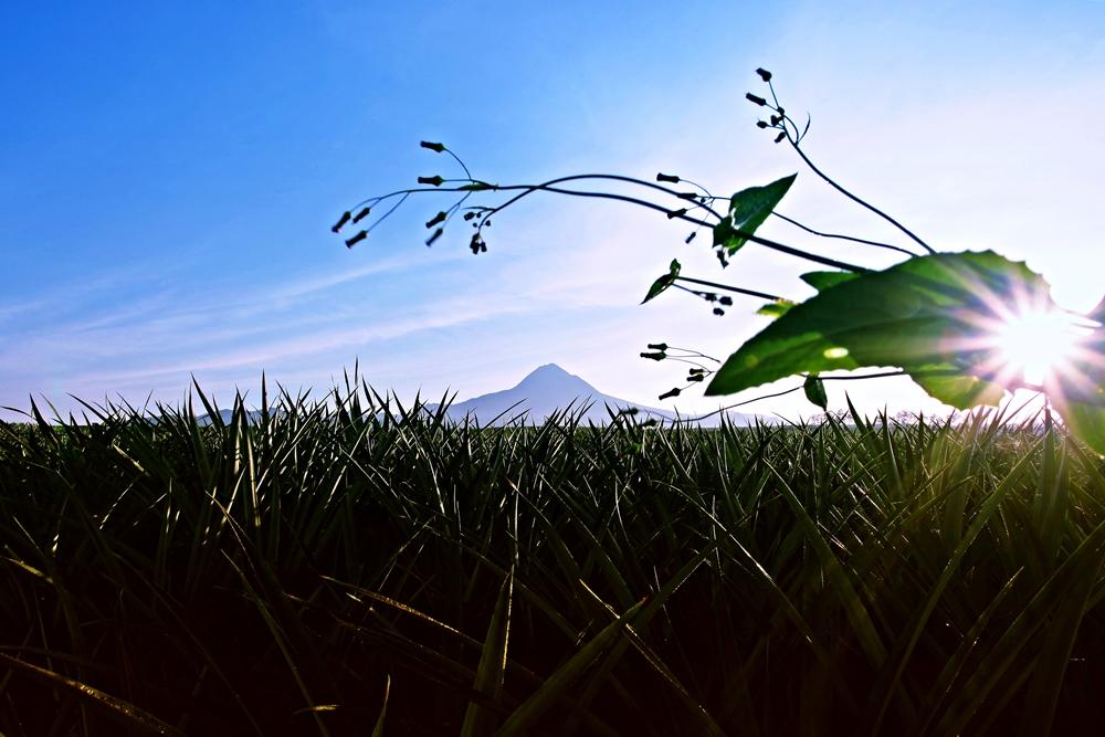 Morning at Mt. Matutum