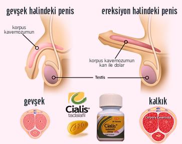 spermi artiran gidalar