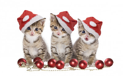 kity_with_christmas_hat_free_download