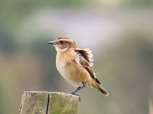 WhinWoodChat