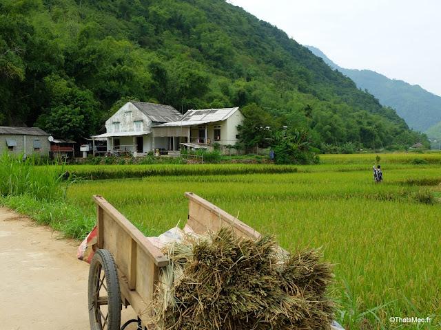 vietnam voyage 15jours mai chau nord montagne riziere charrette paysan