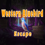 Western Bluebird Escape 8bgames Walthrough