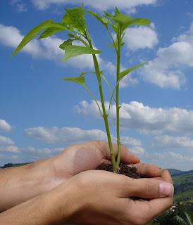 pertanian berbasis ramah lingkungan