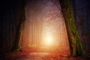 alberi spogli senza foglie