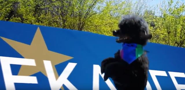 Το σκυλάκι το κανίς δεν ψηφίζουμε εμείς