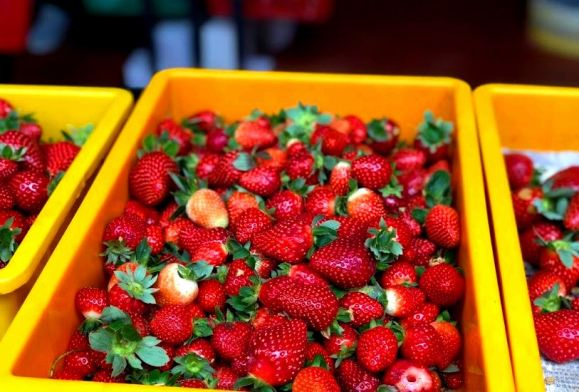 Big red strawberry farm waktu melawat