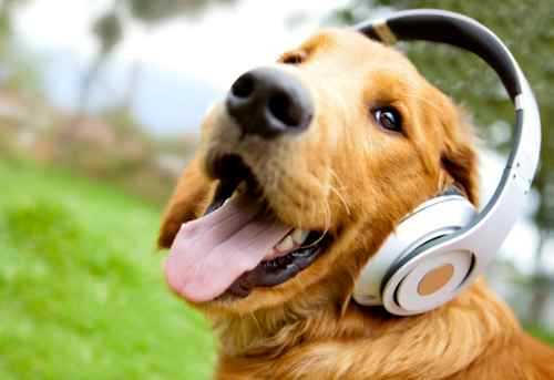 8 Simple Ways To Entertain Your Dog to be Happy
