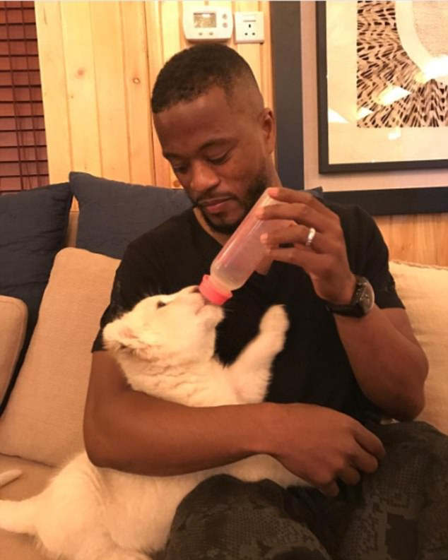 Former Man U defender, Patrice Evra, cradles and bottle feeds a baby lion, calls it 'my little friend'