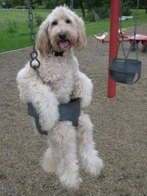 gambar anjing dan ayunan lucu