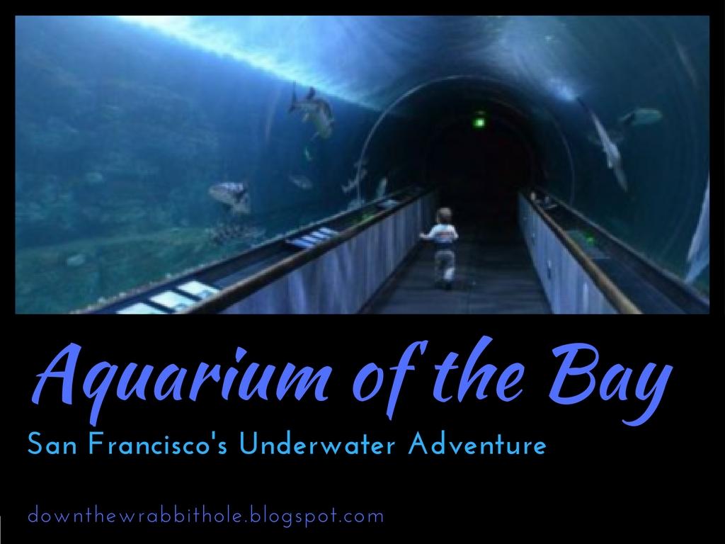 Aquarium Of The Bay San Francisco 39 S Underwater Adventure