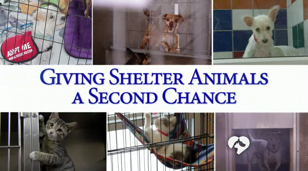 clear the shelters|nbc new york