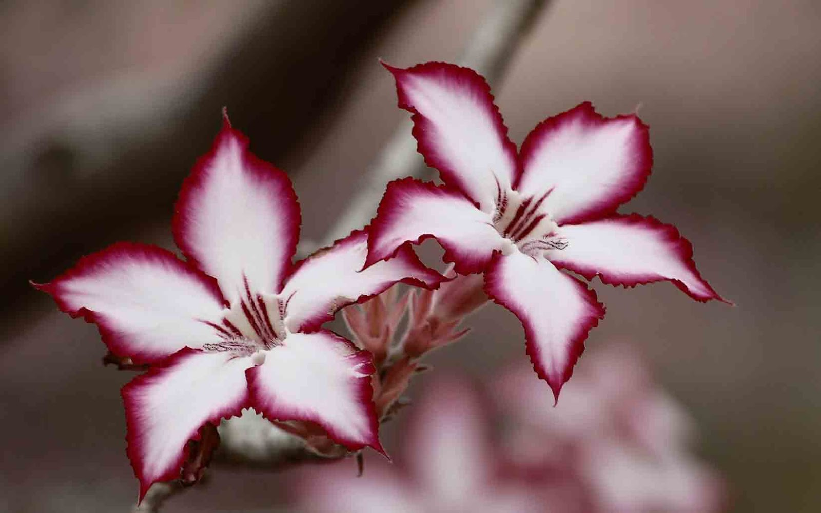 flower images for whatsapp profile download