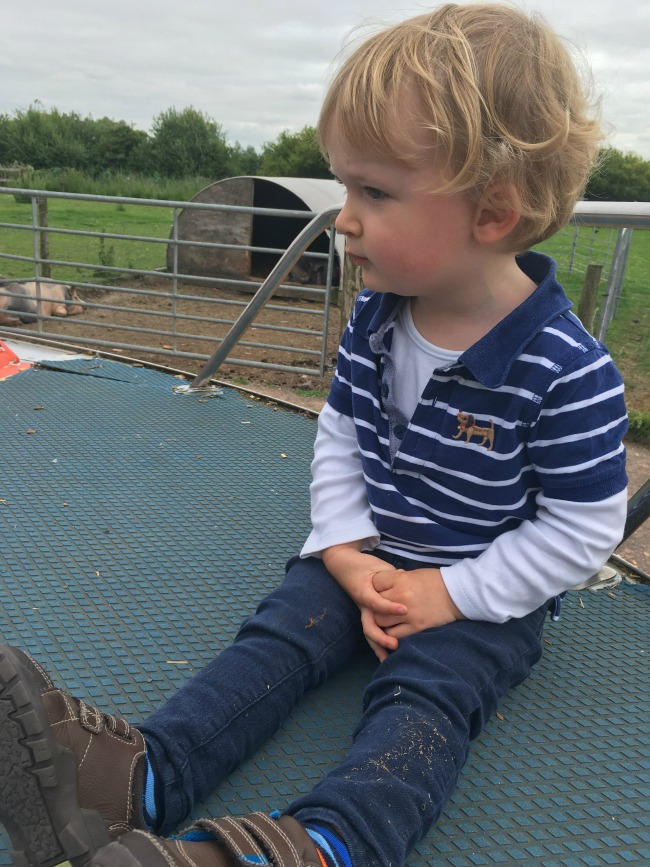 Walnut-tree-farm-park-A-Toddler-sitting-down-with-pigs-in-background