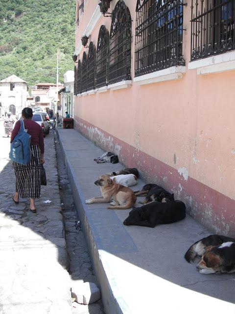 street dogs Panajachel Guatemala