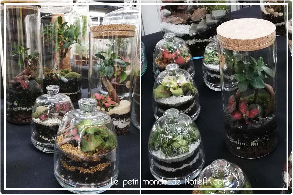 terrarium plante achat