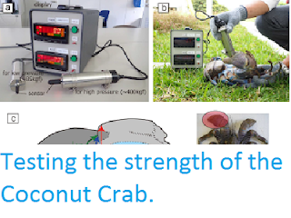 http://sciencythoughts.blogspot.co.uk/2017/02/testing-strength-of-coconut-crab.html