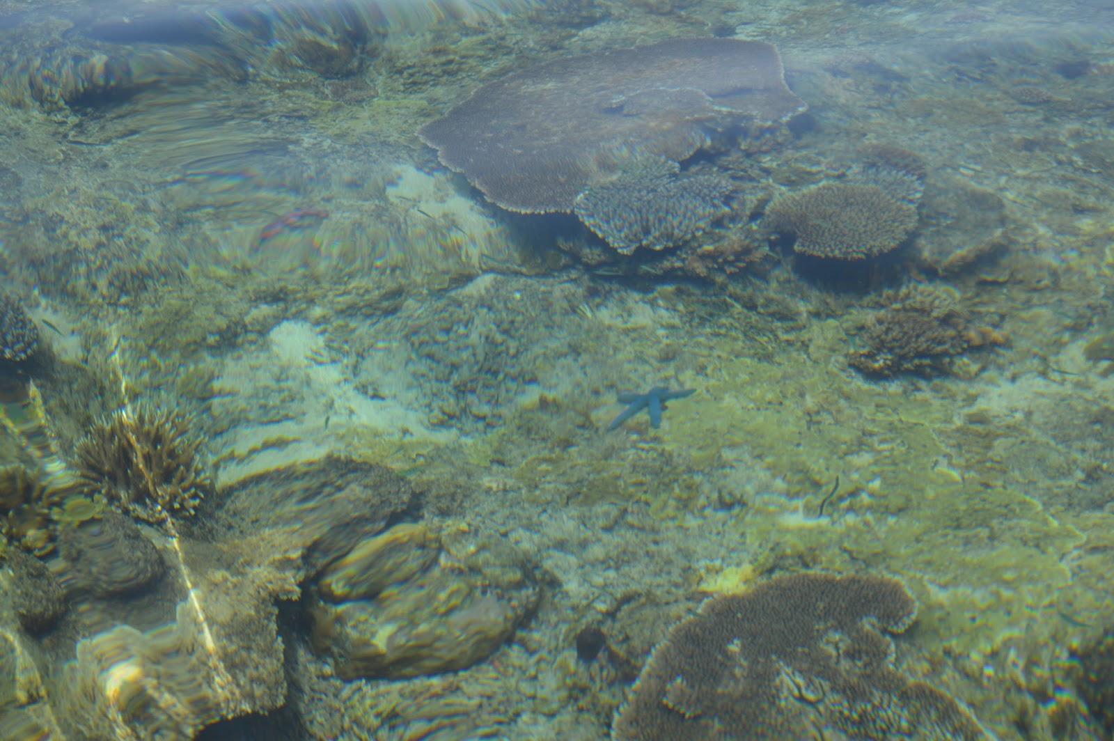 Jejak pengabdianku: Pulau Senua Kabupaten Natuna