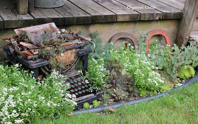 Succulent Planting Ideas in a Junk Garden