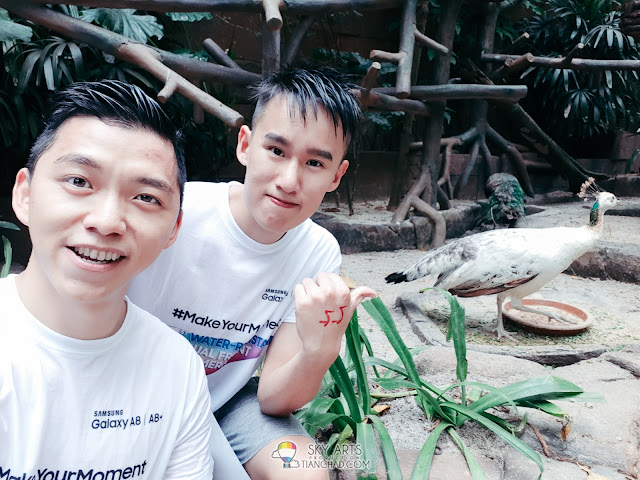 Take selfie photo with a bird at the aviary in Sunway Lagoon (With Live Focus Mode OFF)