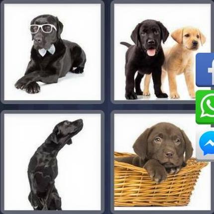 4 Fotos 1 Palabra Perros Soluciones 8 Letras Soluciones Juego