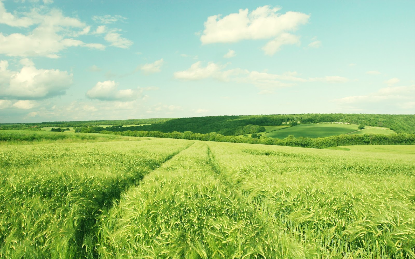 Beautiful Nature Green Field Wallpaper