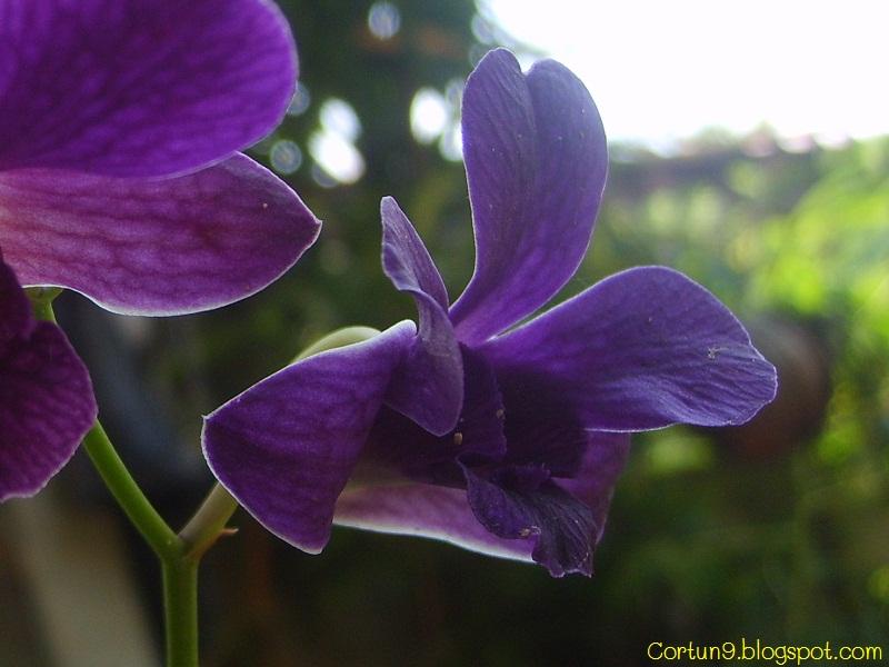 Orchids Flowers Pictures Bulbophyllum Vanda Cattleya