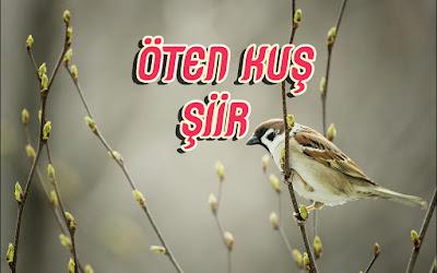 Öten Kuş - Şiir