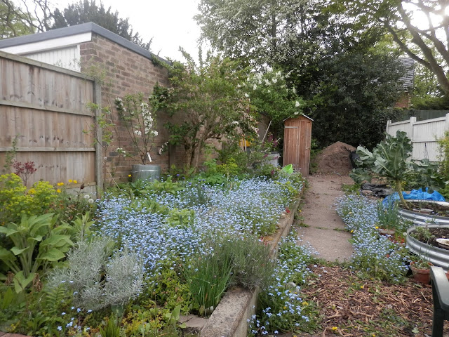 Diary of a permaculture (ish) garden, April 2019. From UK garden blogger secondhandsusie.blogspot.com #gardenblogger #ukpermaculture #suburbanpermaculture #wormcomposting #appleblossom #frontgardenraisedbed #frontgardenallotment