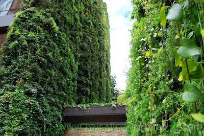 Căn hộ 11 tầng được 'bảo hộ' bởi cây xanh 6