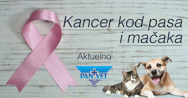 Karcinomi kod pasa i mačaka