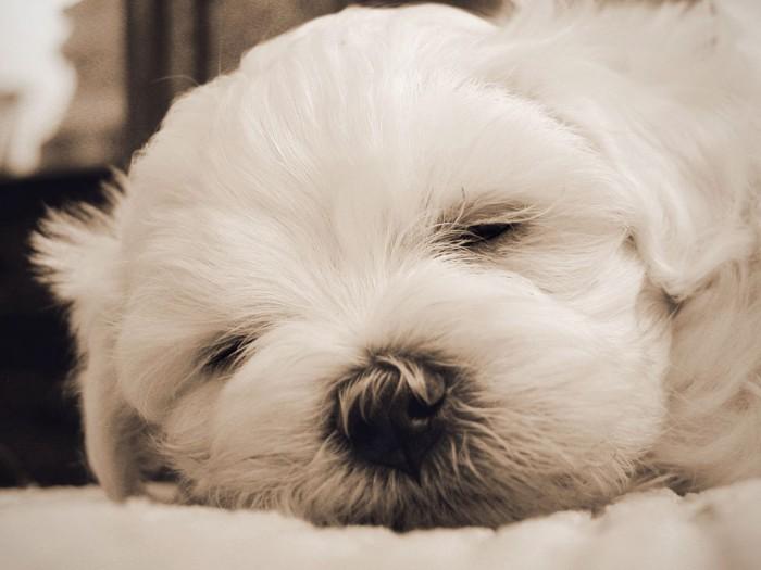 Cute Rottweiler Puppy Wallpaper Cute Puppy Dogs Cute Maltese Puppy