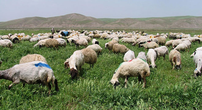 Genç çiftçi hibe başvuruları başladı