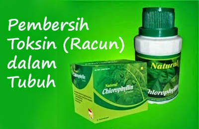 natural-chlorophyllin-nasa-natural-nusantara-herbal-distributor-agen-natural-stockis-obat-sehat-sembuh