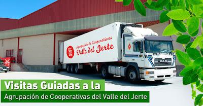 VISITAS GUIADAS: La Agrupación de Cooperativas del Valle del Jerte abre sus puertas