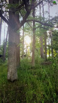 świetlisty las, światło, mistycyzm