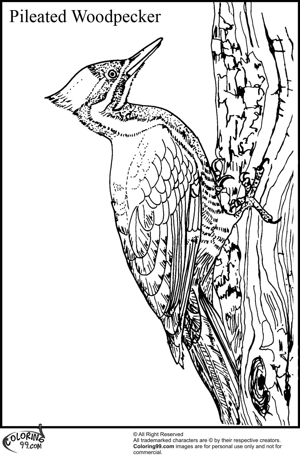 Woodpecker Coloring Pages Team colors
