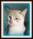 10/17/11Tuxedo Cats, Torties, Tabbies on Deathrow. Please Adopt, Rescue, Sponsor, Pray For Cats at