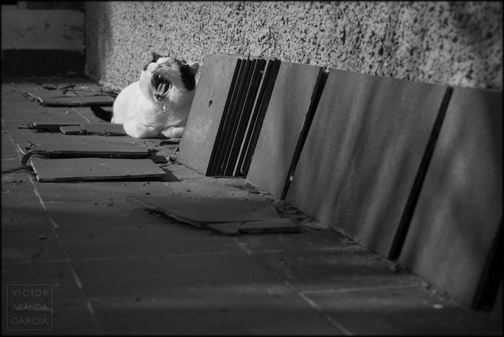 fotografia,gato,boca,baldosas,murcia,fuente_alamo