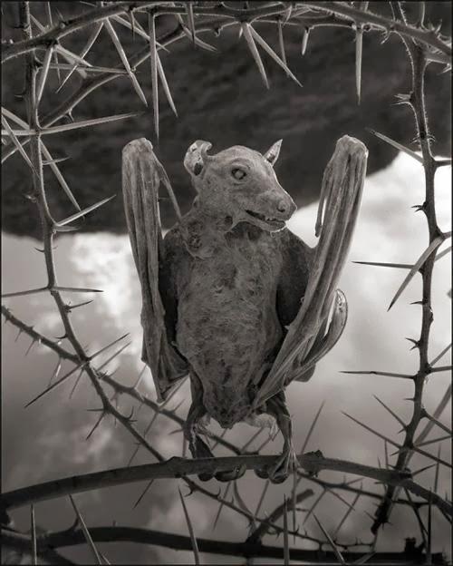بحيرة قاتلة تحول الحيوانات تماثيل